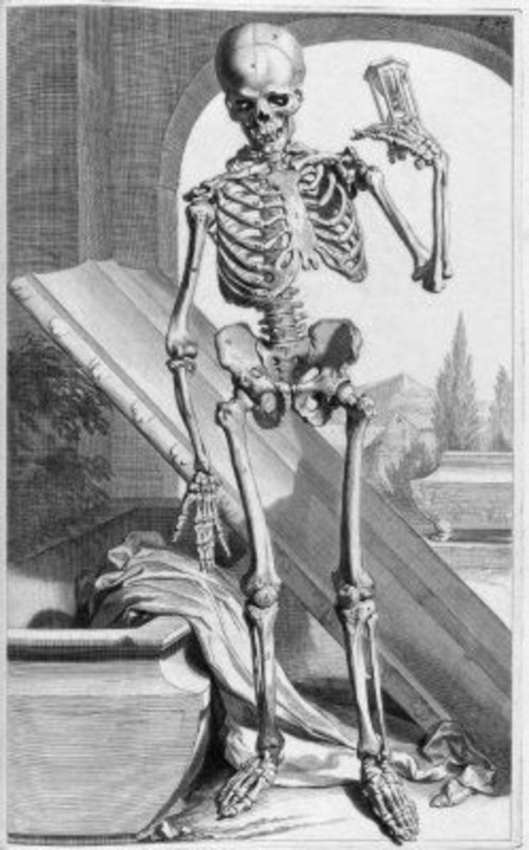 Skeleton Illustration Table 87 from Ontleding des menschlyken lichaams