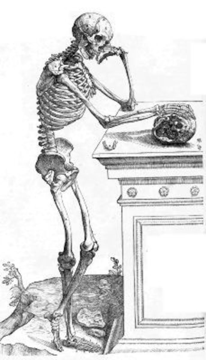 Skeleton Image from De humani corporis fabrica Page 164
