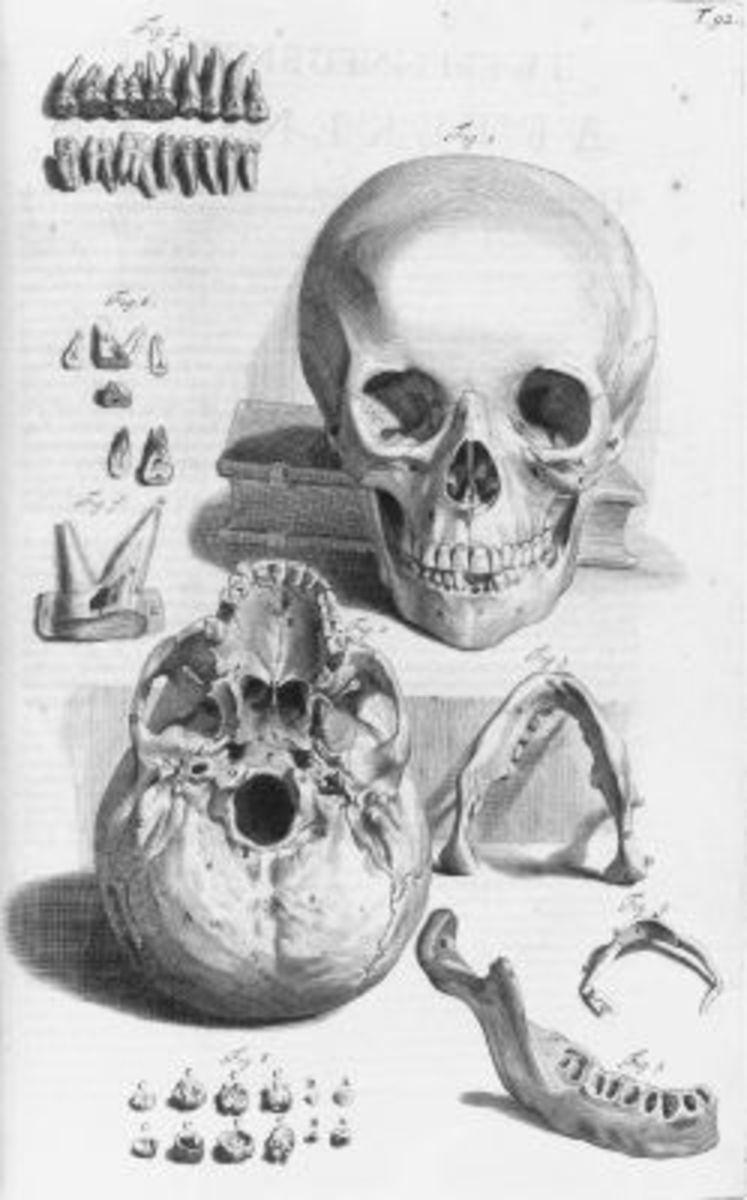 Skull Illustration Table 92 from Ontleding des menschlyken lichaams