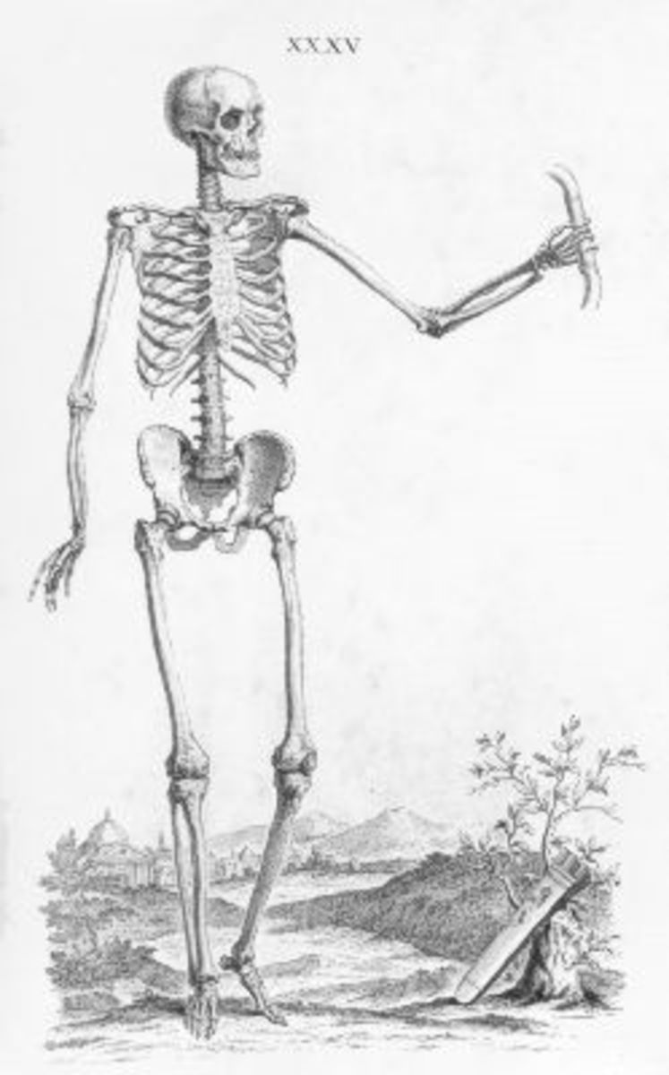 Skeleton Illustration Plate 35 from Osteographia, or The anatomy of the bones