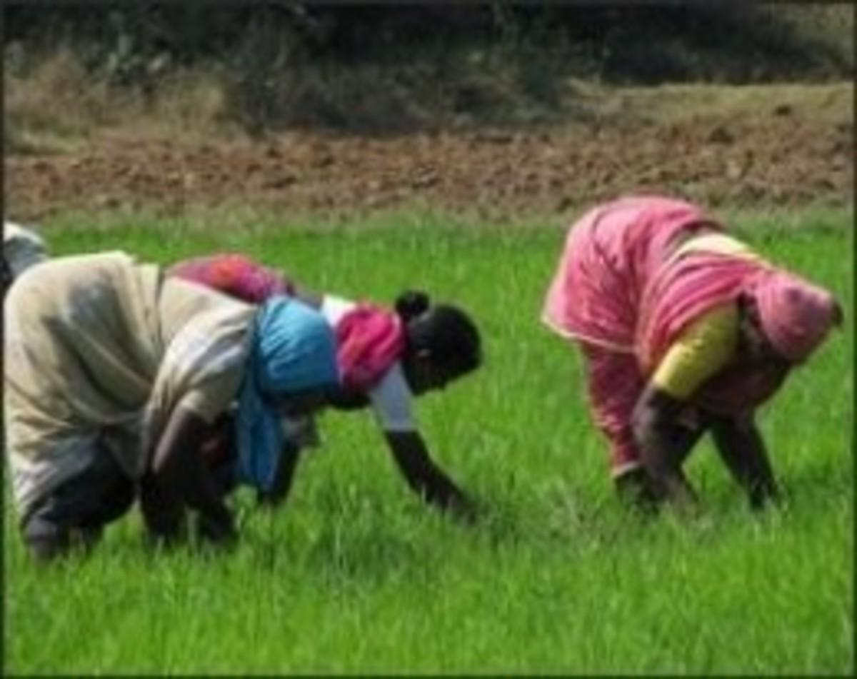 Folk Songs of Farm Workers