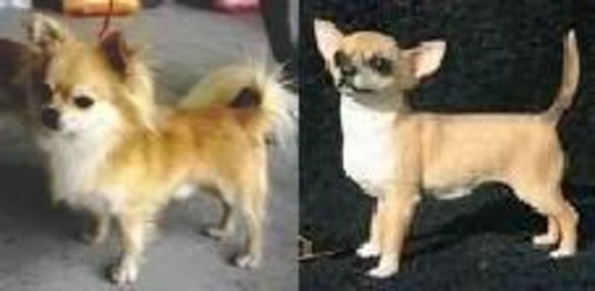 types-of-small-dogs