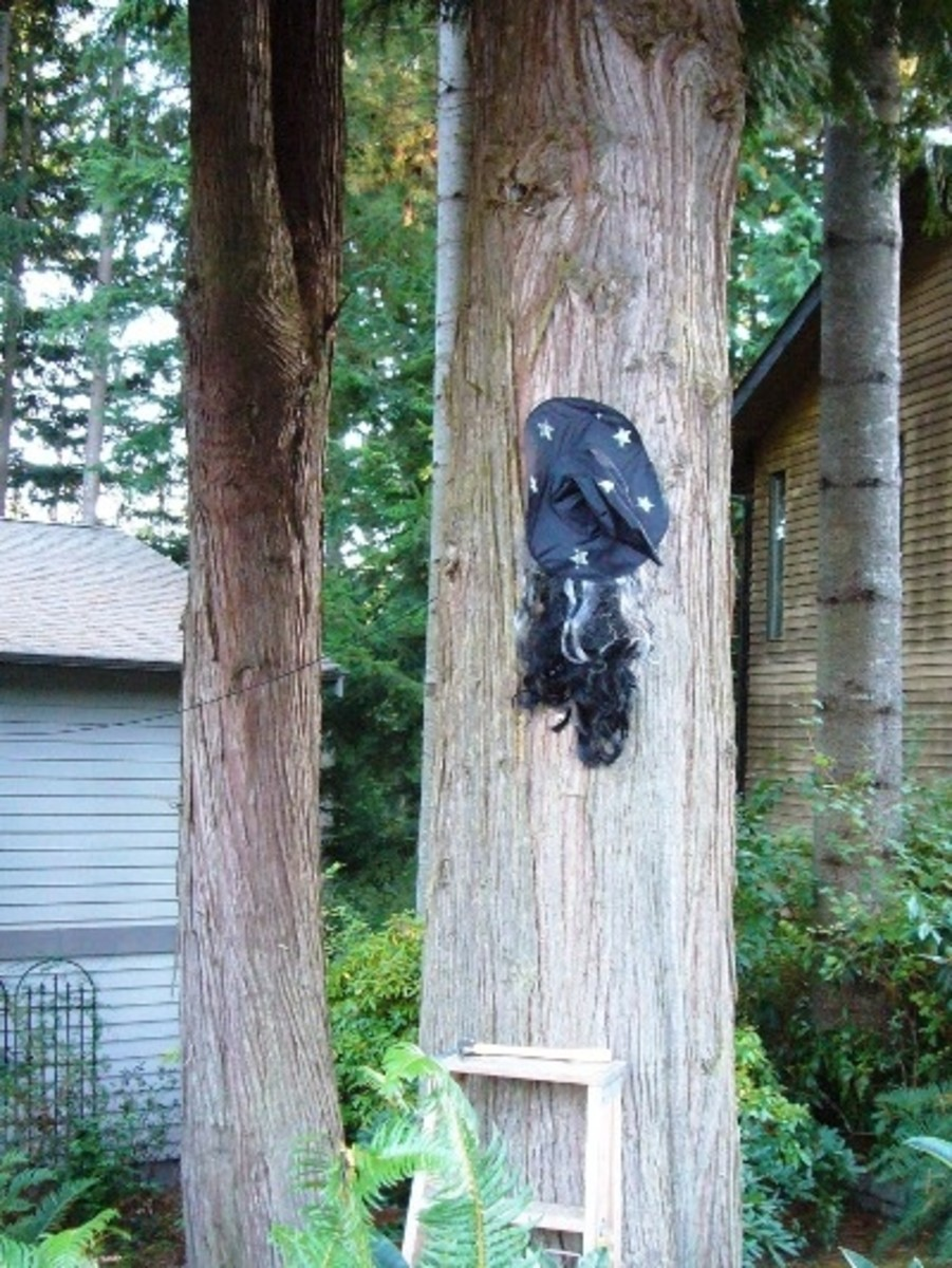 First get out your ladder and determine the height where you want to attach your witch to the tree.  Then either using a nail, screw or staple, attach the hat and hair to the tree.