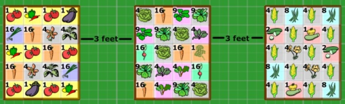 Square Foot Gardening Layout