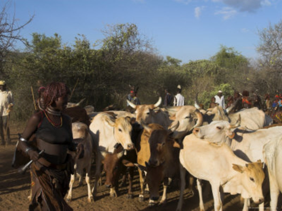 the-hamer-people-of-ethiopia