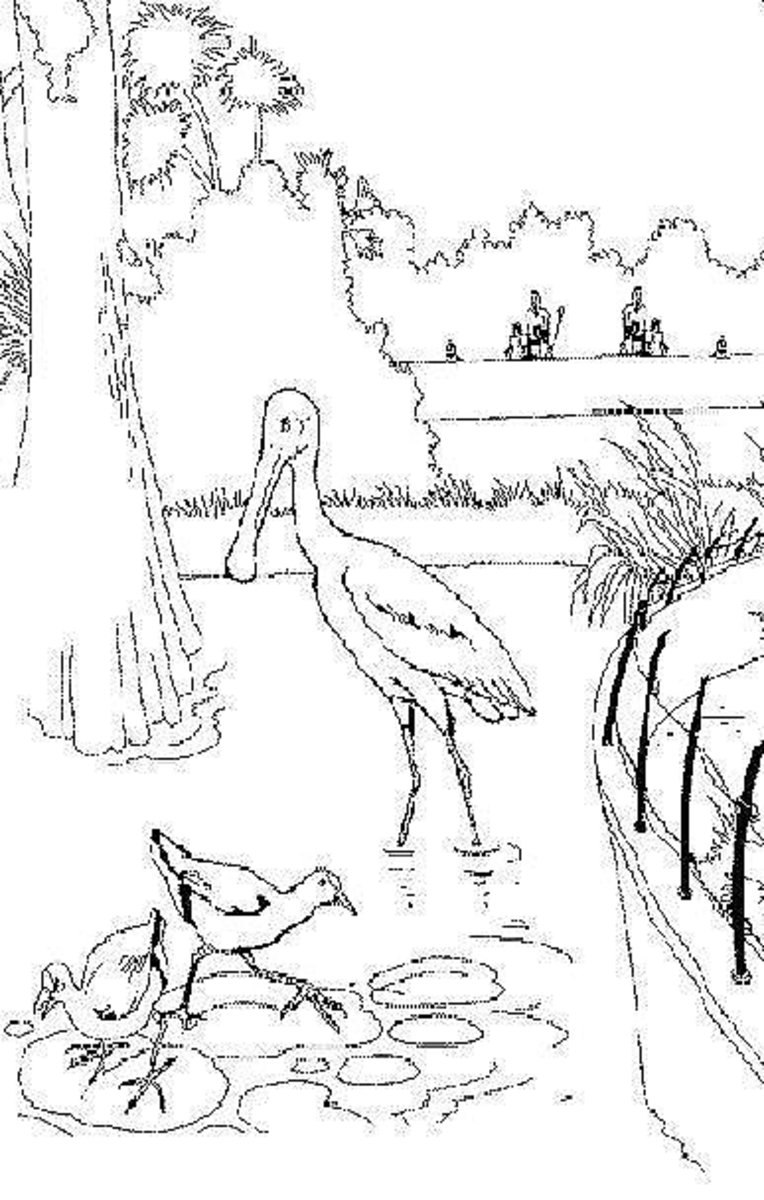 Zoo-Animals Coloring Pictures Colouring Pages Bird Enclosure