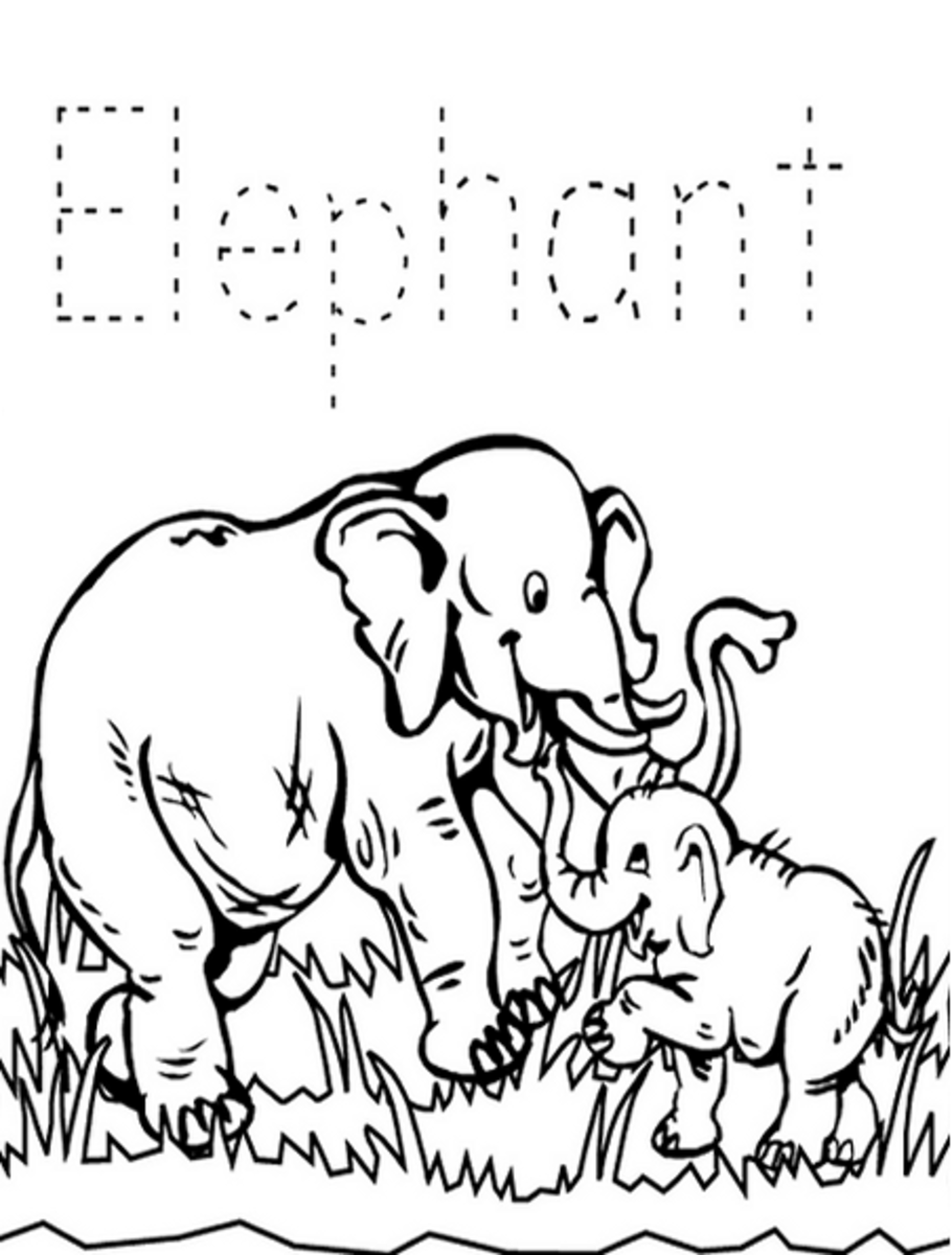 Zoo-Animals Coloring Pictures Colouring Pages Elephants