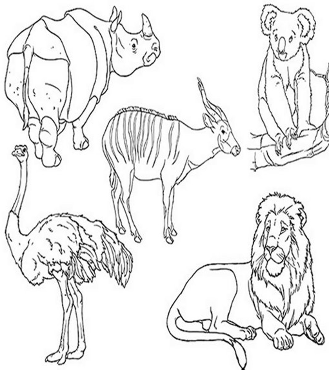 Zoo-Animals Coloring Pictures Colouring Pages Montage Rhino Ostrich Lion
