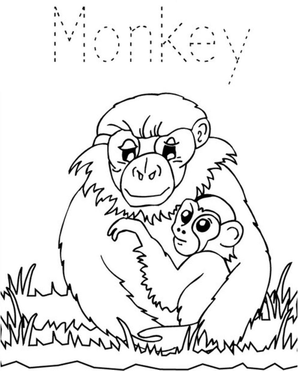 Zoo-Animals Coloring Pictures Colouring Pages Monkeys
