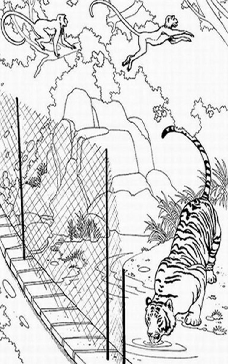 Zoo-Animals Coloring Pictures Colouring Pages Tiger Enclosure