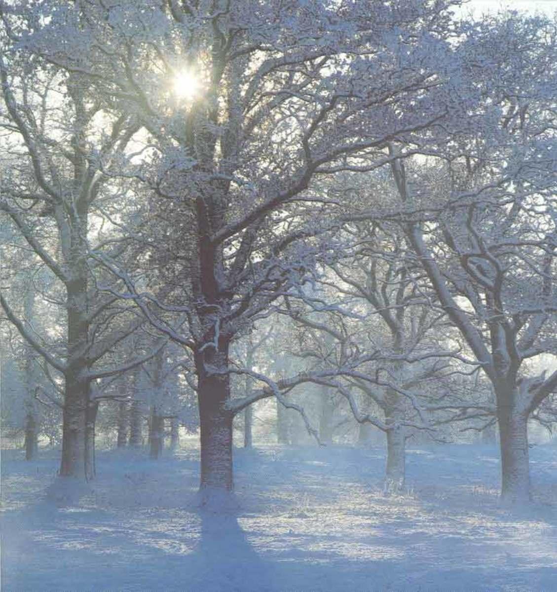 5-ways-to-predict-snow