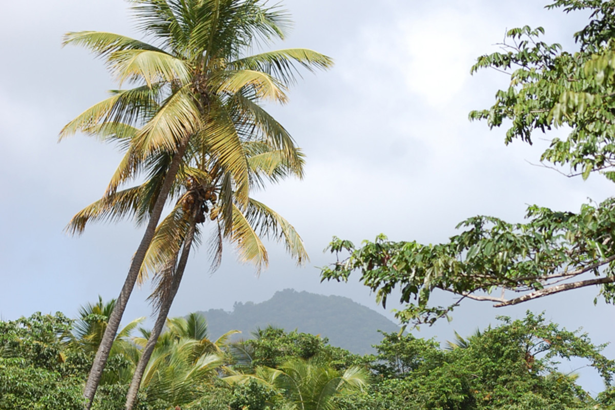 Dominica Mountain Fortress