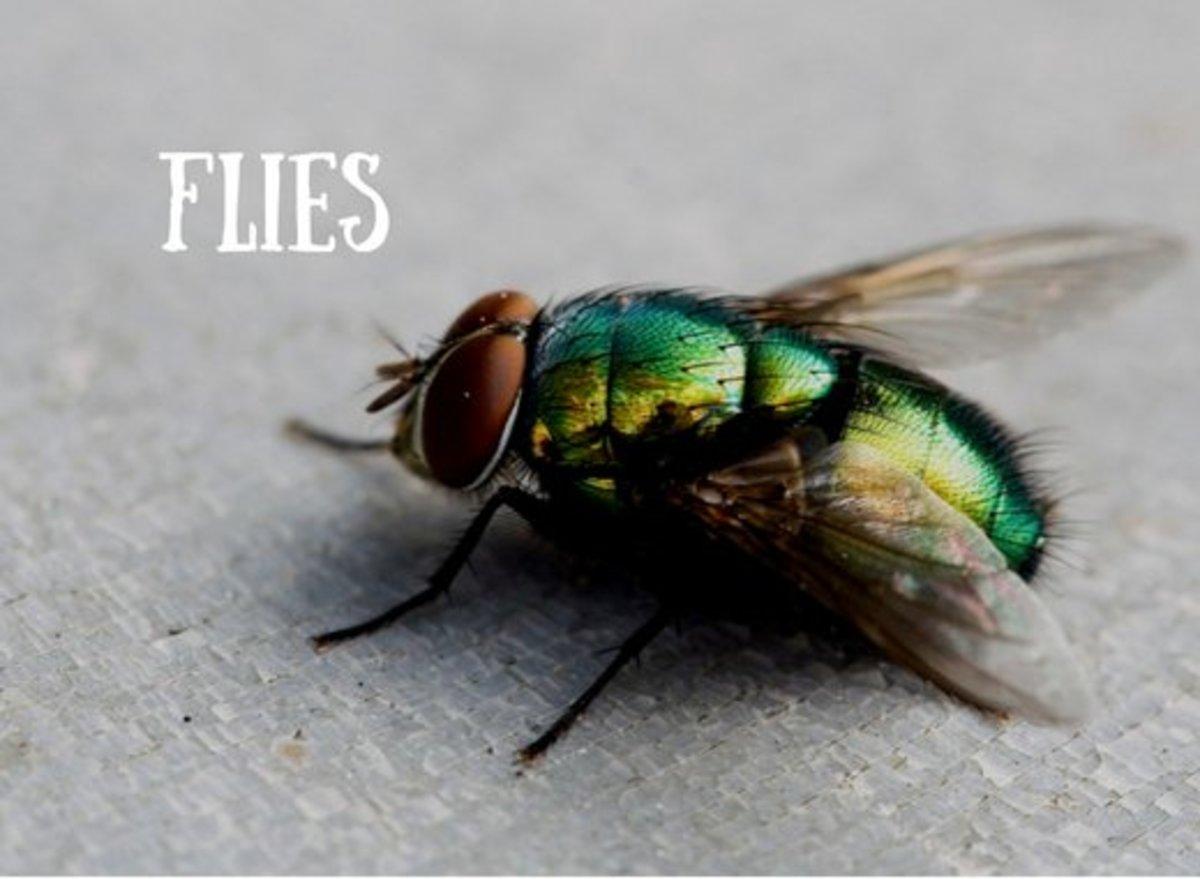 prayer-against-evil-spirit-serpents-birds-and-flies