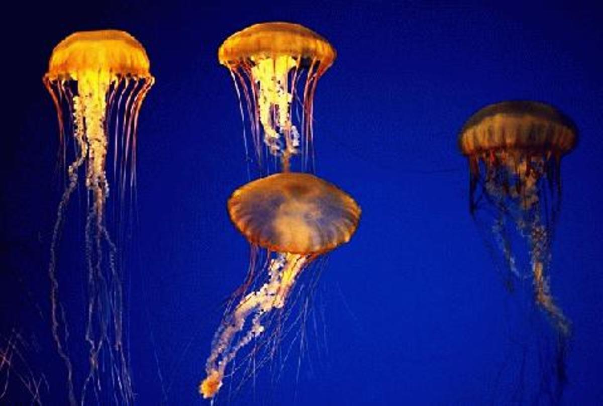how-to-treat-box-jellyfish-stings
