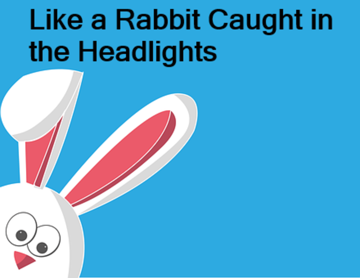 There is nothing quite like a Startled Rabbit
