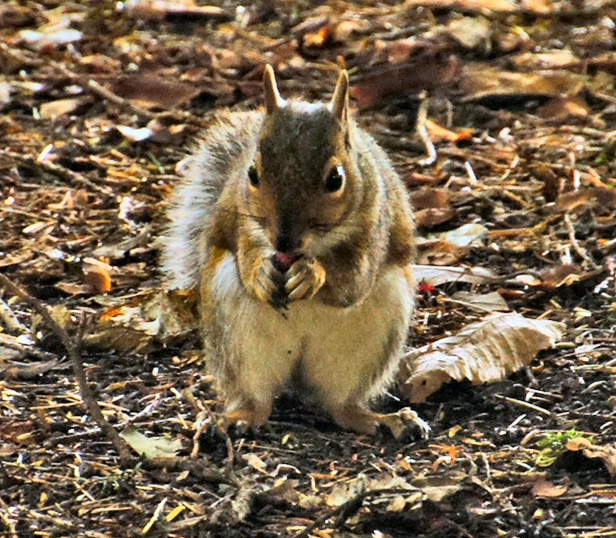 Nuts! Not just for squirrels, but for you to contribute to beautiful skin.