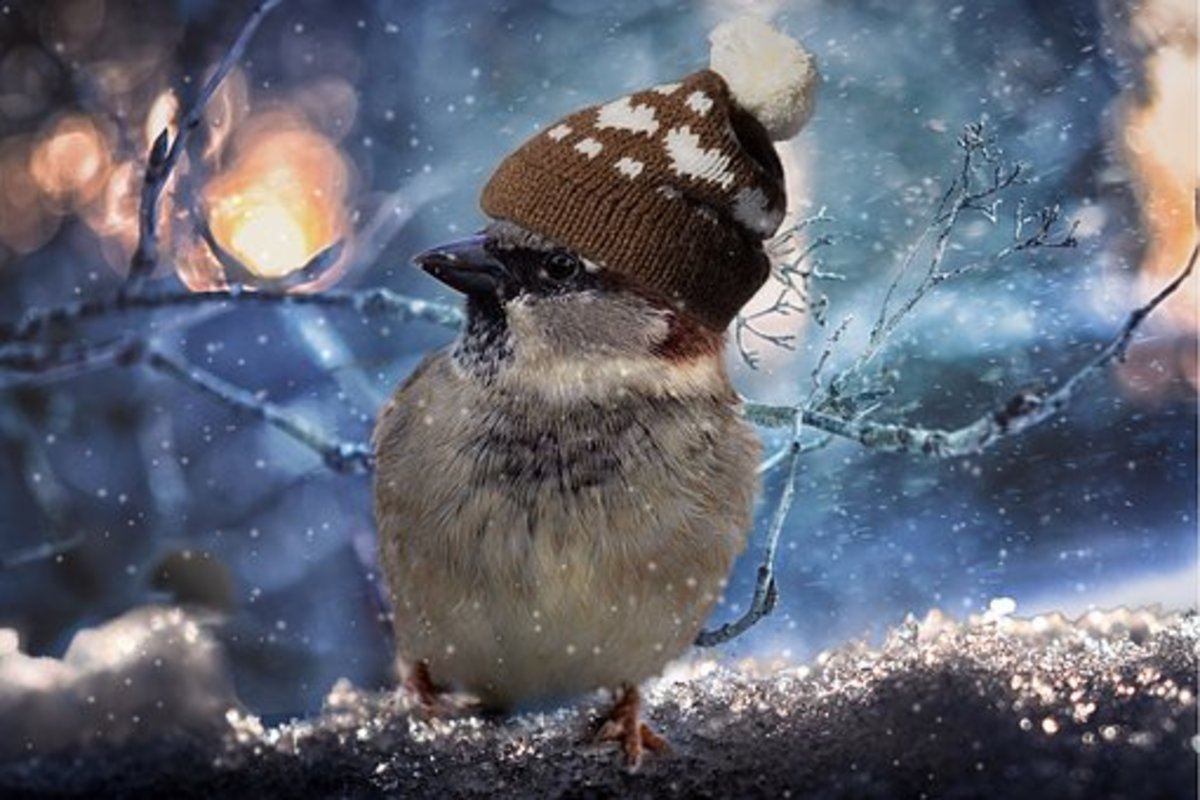 Shivering bird - What Do You Call a Bird in the Winter?