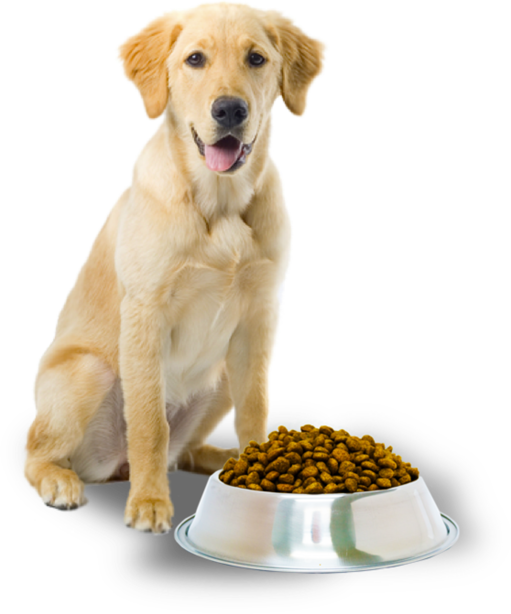 Be careful what you feed your dog.