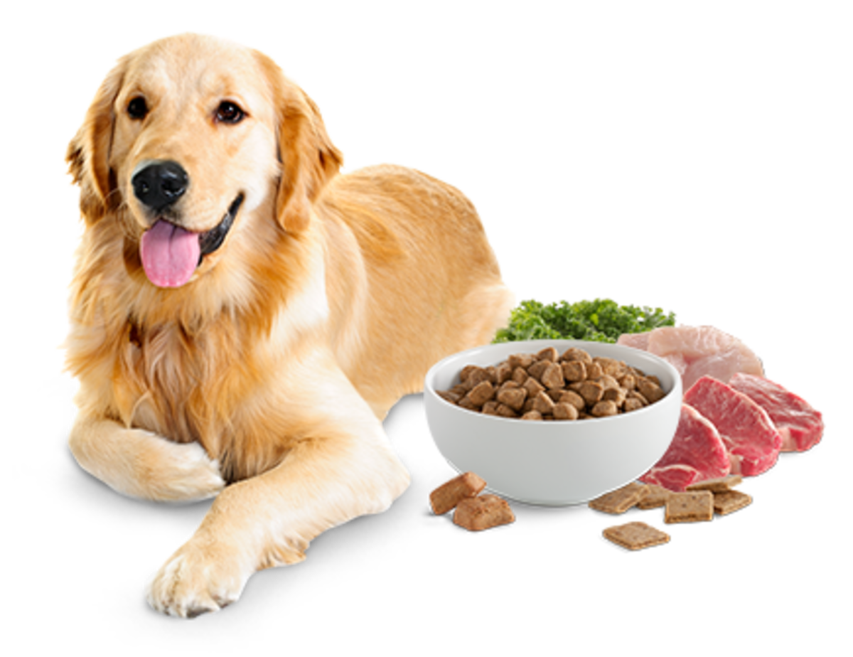 A well-fed dog is a happy dog.