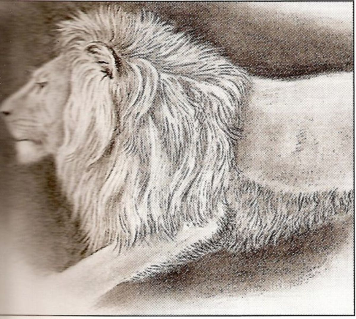 Asiatic lion drawn from specimen living in the Tower of London circa 1820