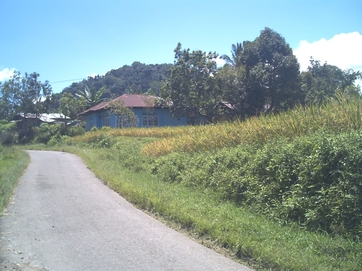 The way to Luka Panjang in Nagari Kumango
