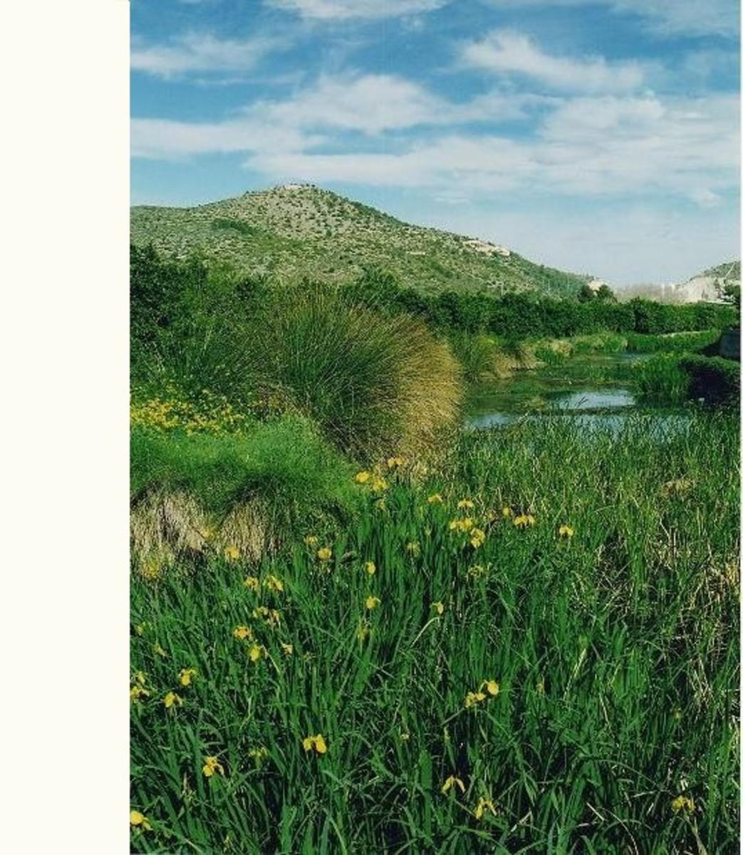 Pego-Oliva Natural marsh Park