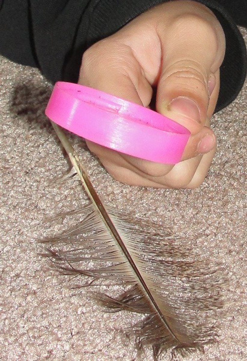 Studying a feather using a magnifying glass