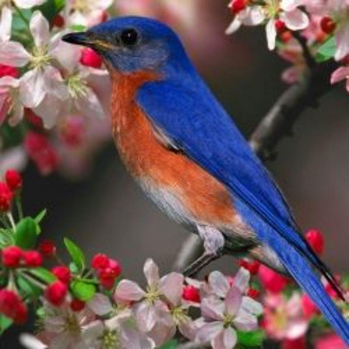 birds-lesson-plan-in-animal-classification-unit-study