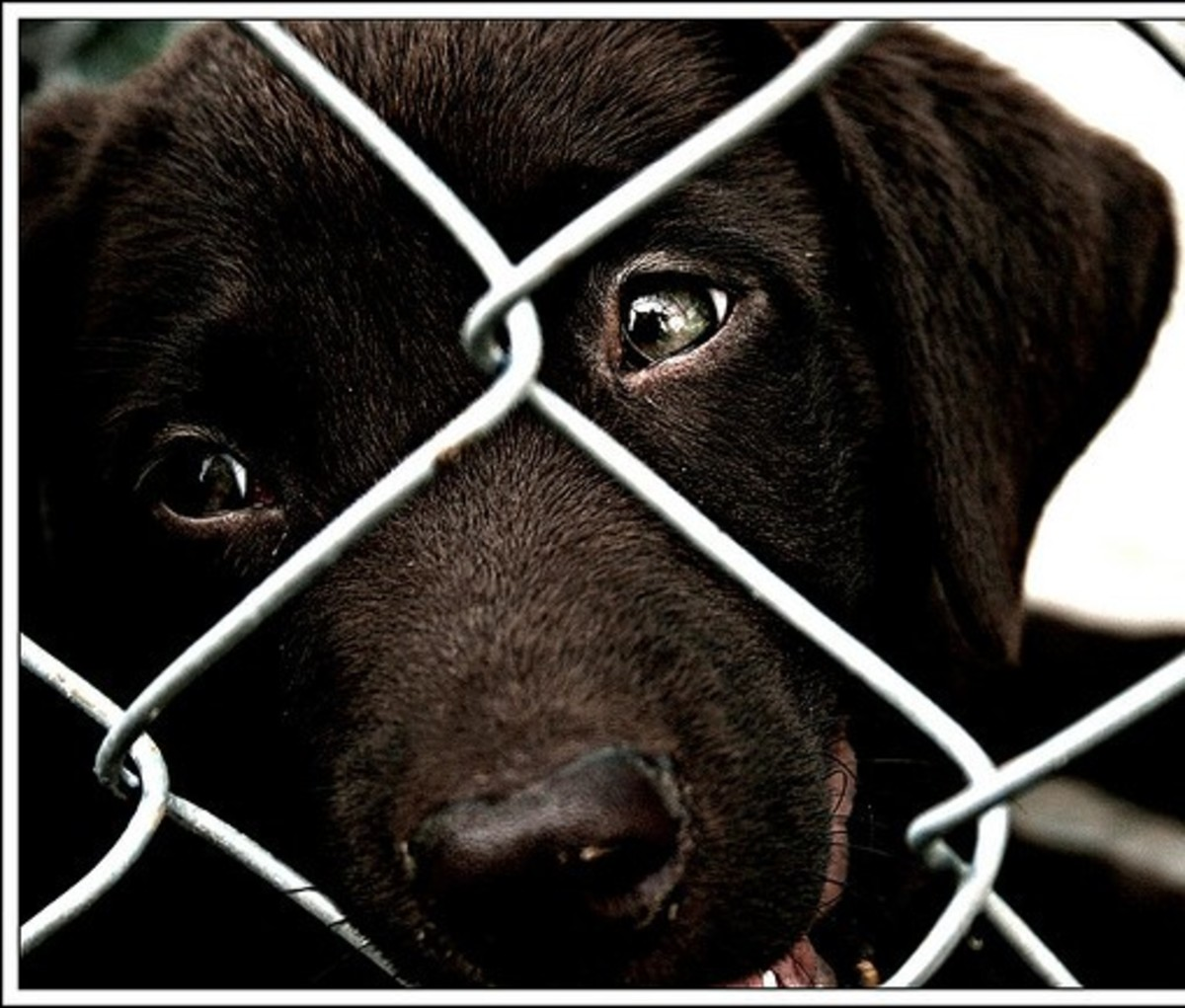 What is a Puppy Mill?  Facts and Statistics