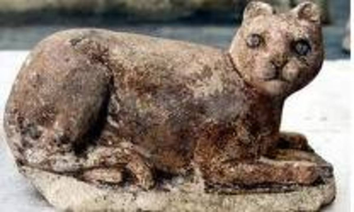 Mummified cats on display at the British Museum