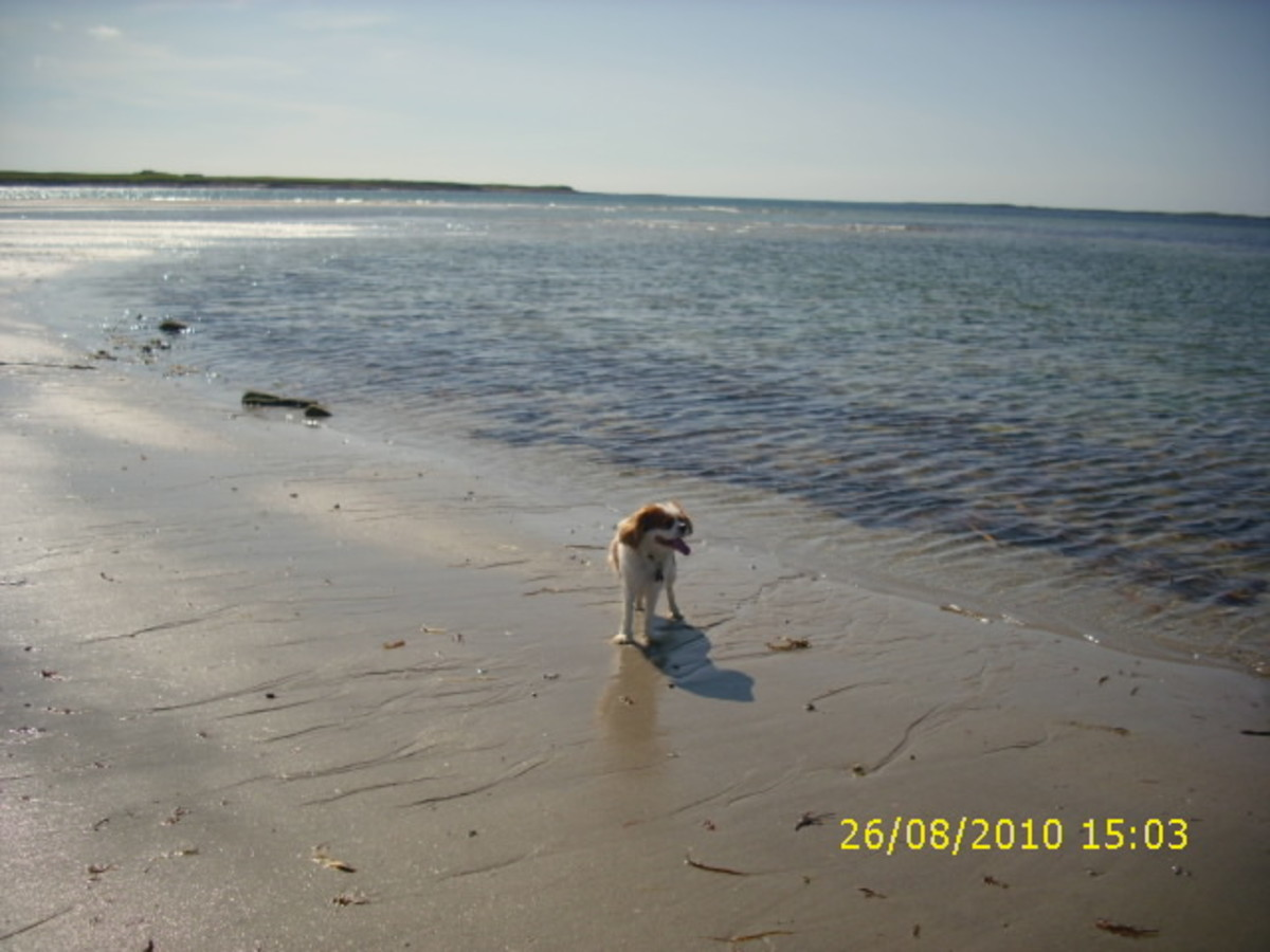 Angus in Carne beach.
