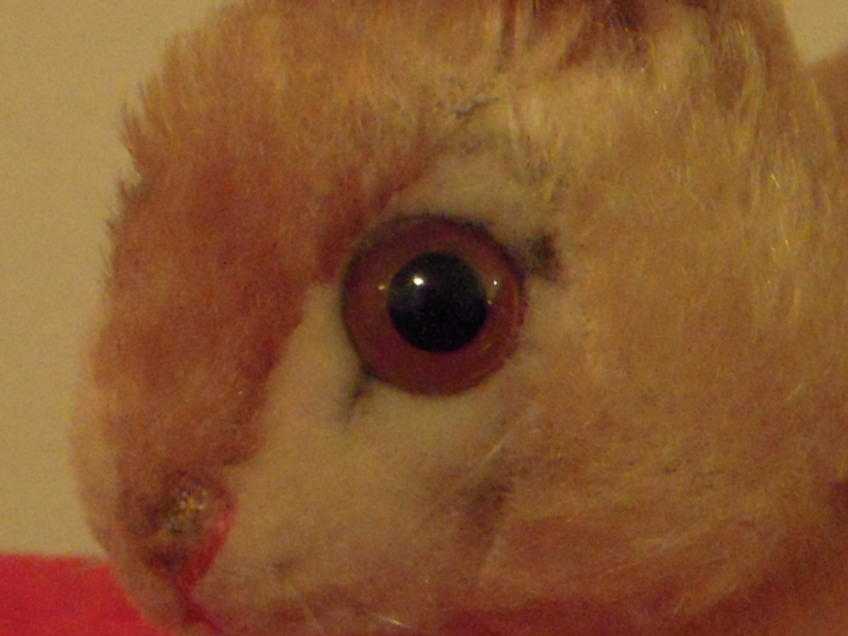 The pensive rabbit has beautifully detailed eyes. The mohair section between the eyes is a darker color, which effectively hides the seams.