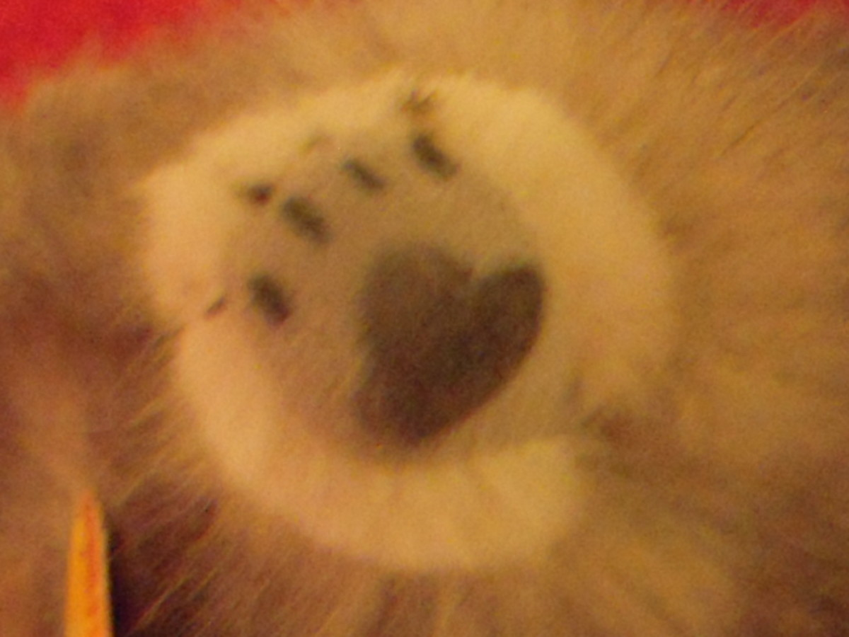 Even synthetic plush animals have realistic details, such as these cat paws