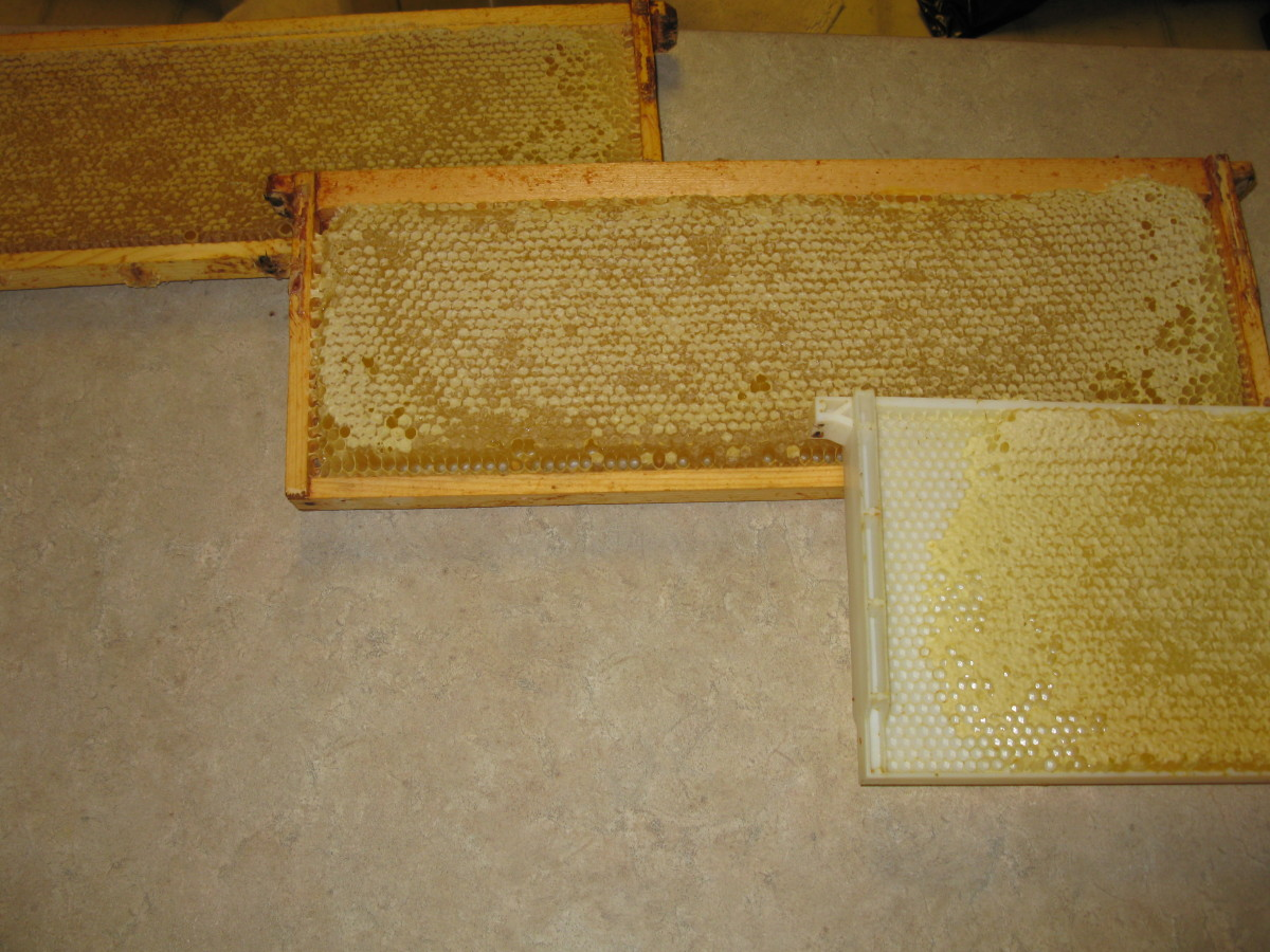 Dandelion, Alfalfa and Lavender Honey Frames