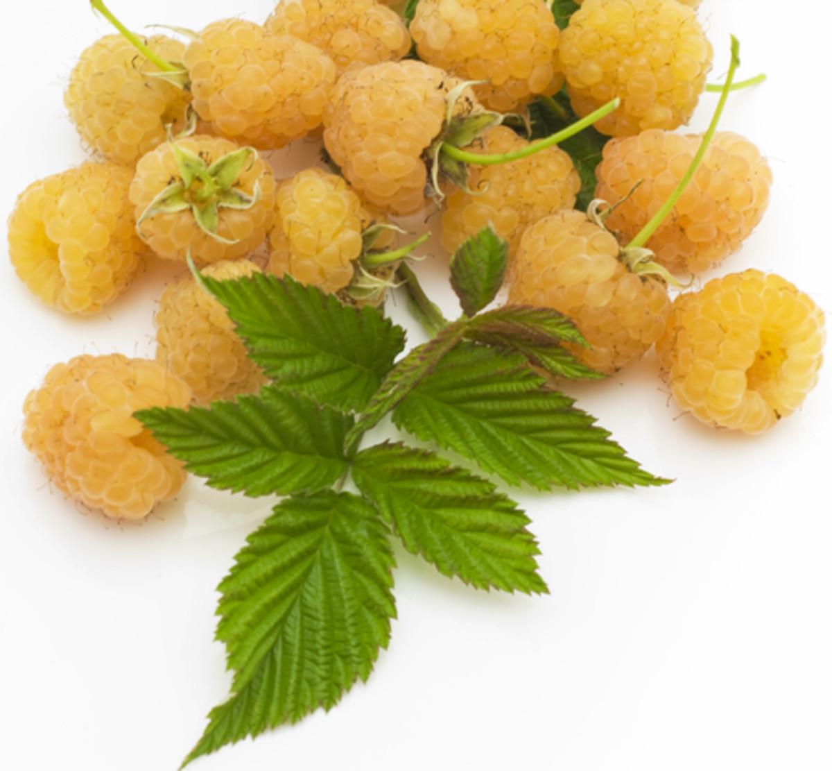 Yellow Raspberries. Image:  Aprilphoto Shutterstock.com