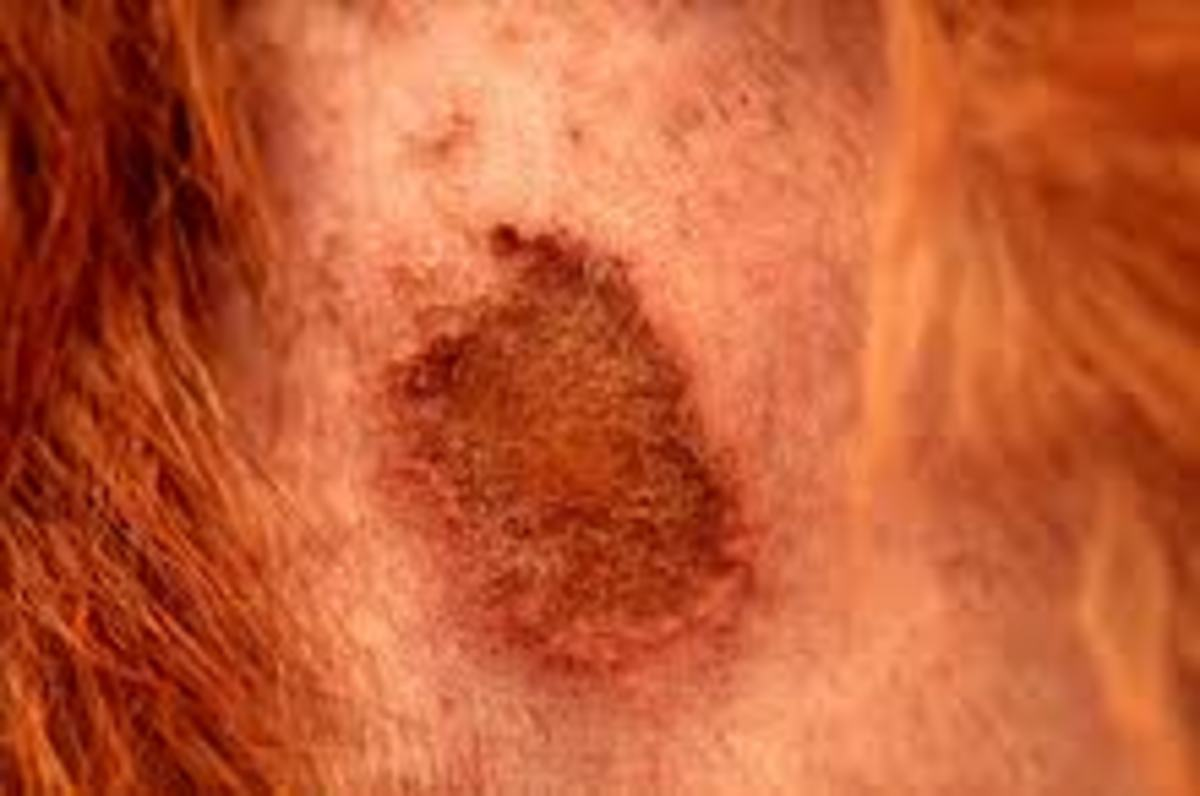 What Do Dog Skin Allergies Mean