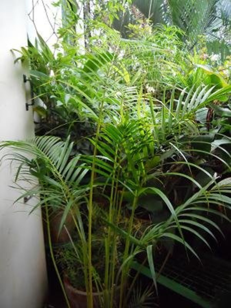 The Parlor Palm Pics by Sofs