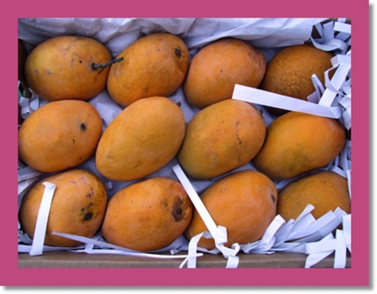 Alphonso Mangoes in Box