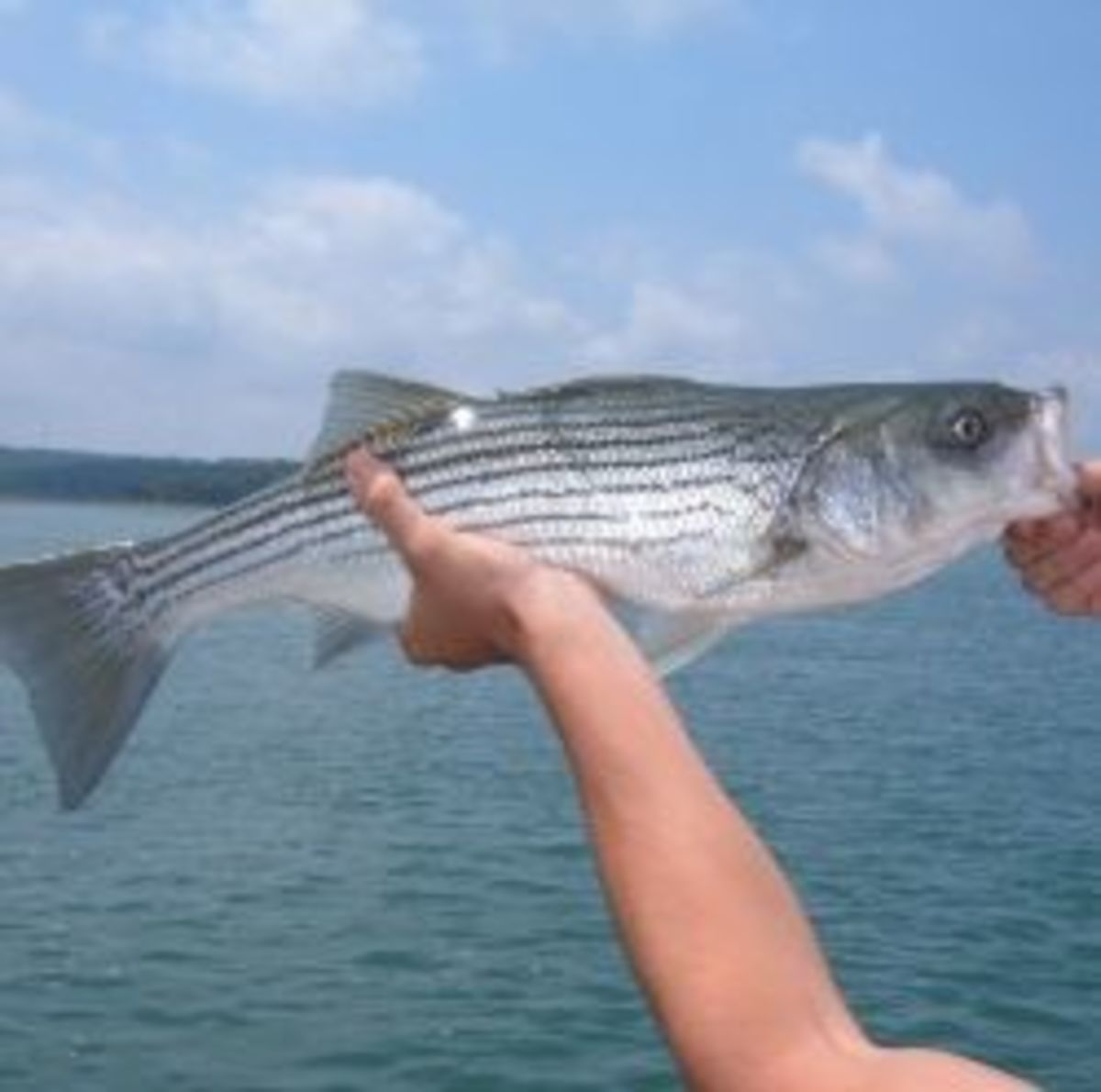 Even small stripers are fun to catch!