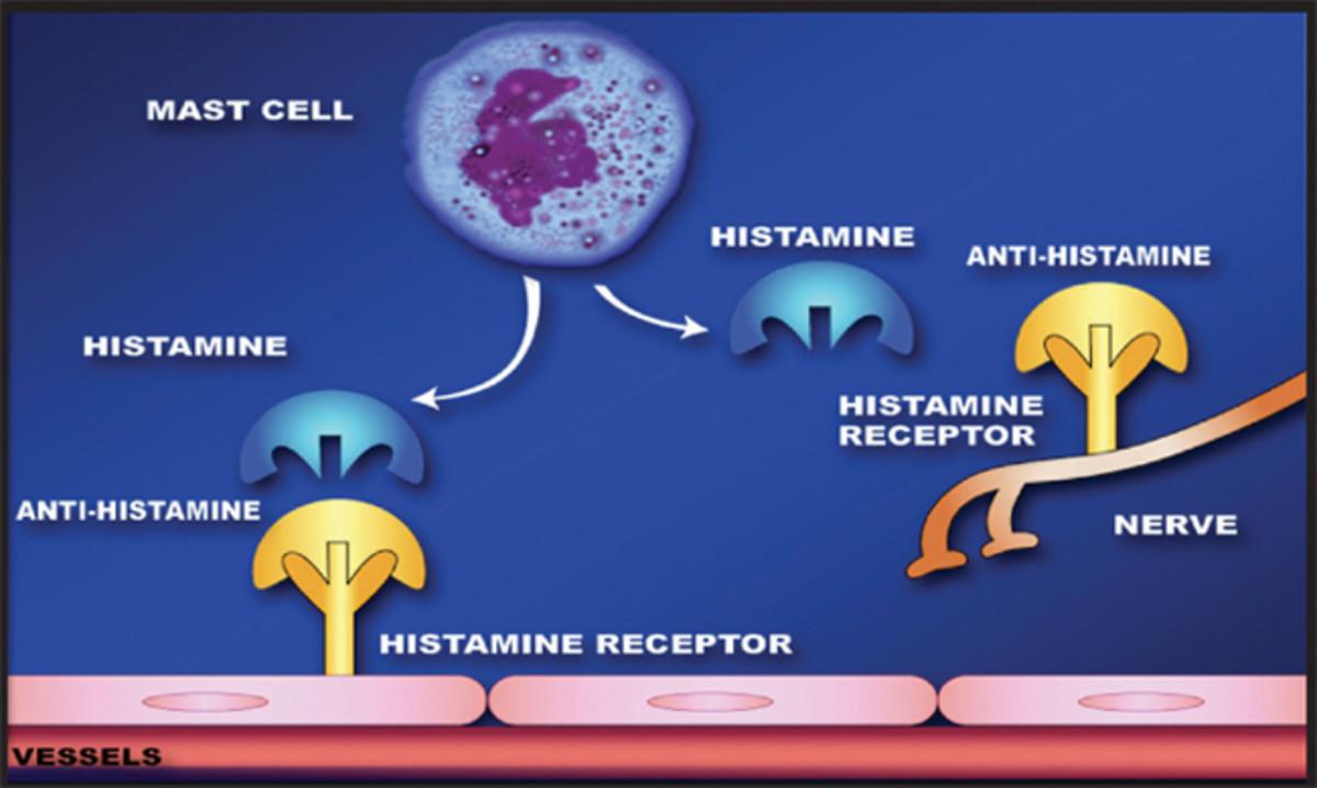 How antihistamines act