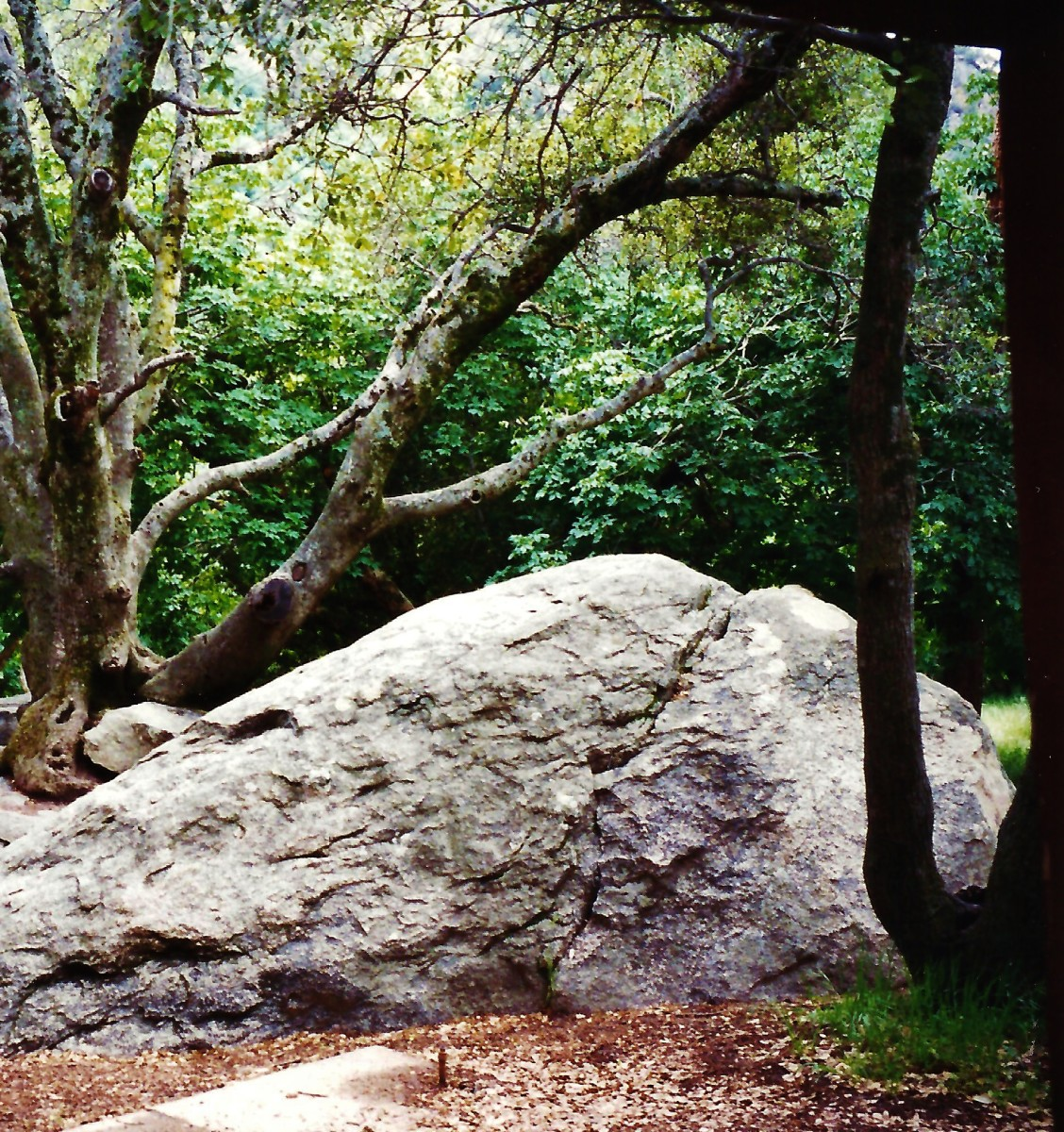Sequoia National Park ~ Hospital Rock Pictures ~ Southwest Native American Indians
