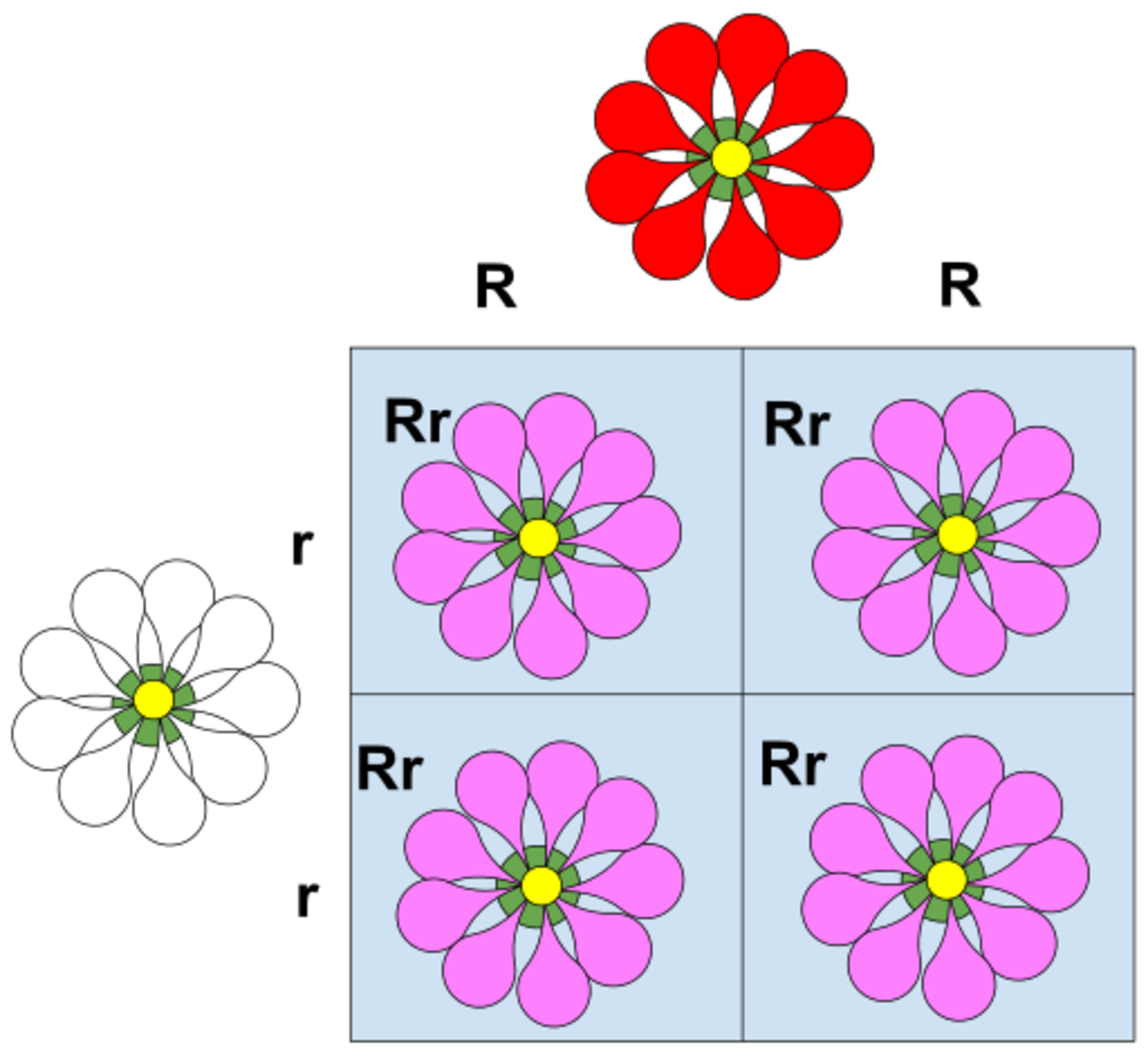 Incomplete Dominance means the traits get mixed.  Red and white make pink, in incomplete dominance.