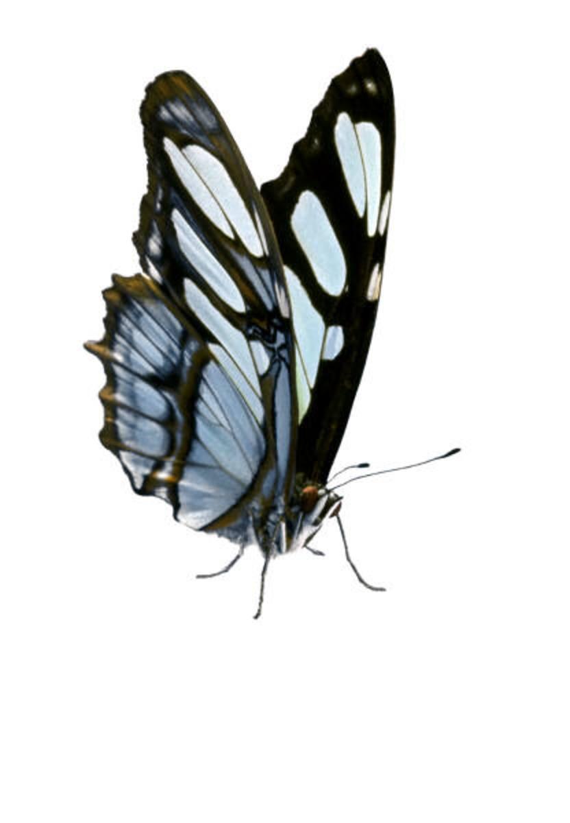 butterfly-haiku