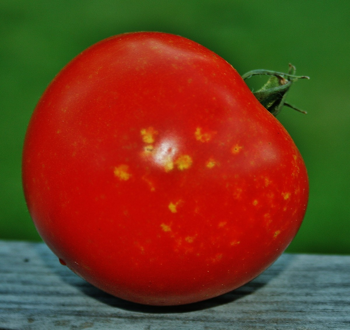 Help! My Tomatoes Have Acne!