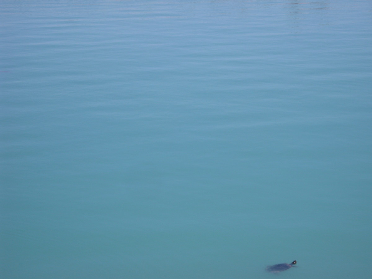 Look closely to see a turtle, lower right hand side!