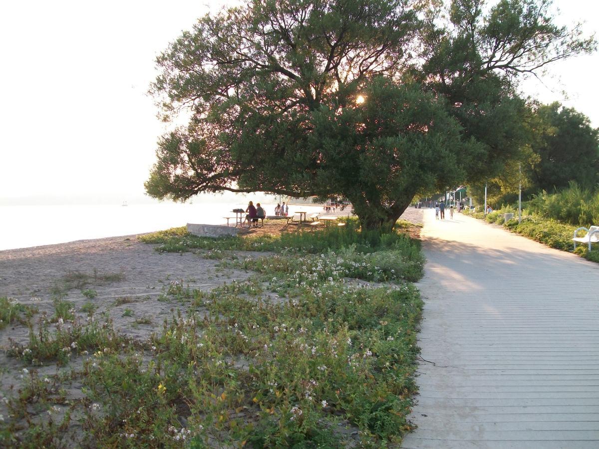 Pickering Barrier Beach