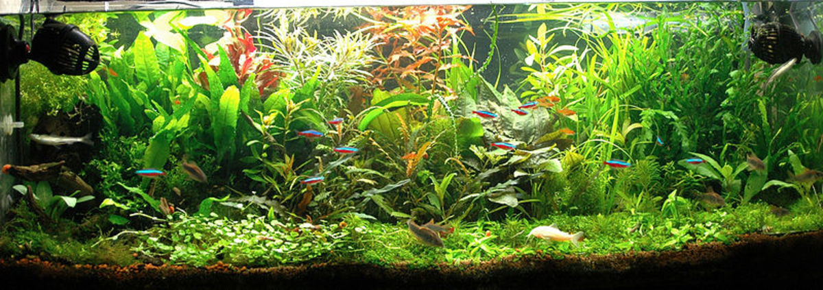 Beautifully landscaped freshwater aquarium.