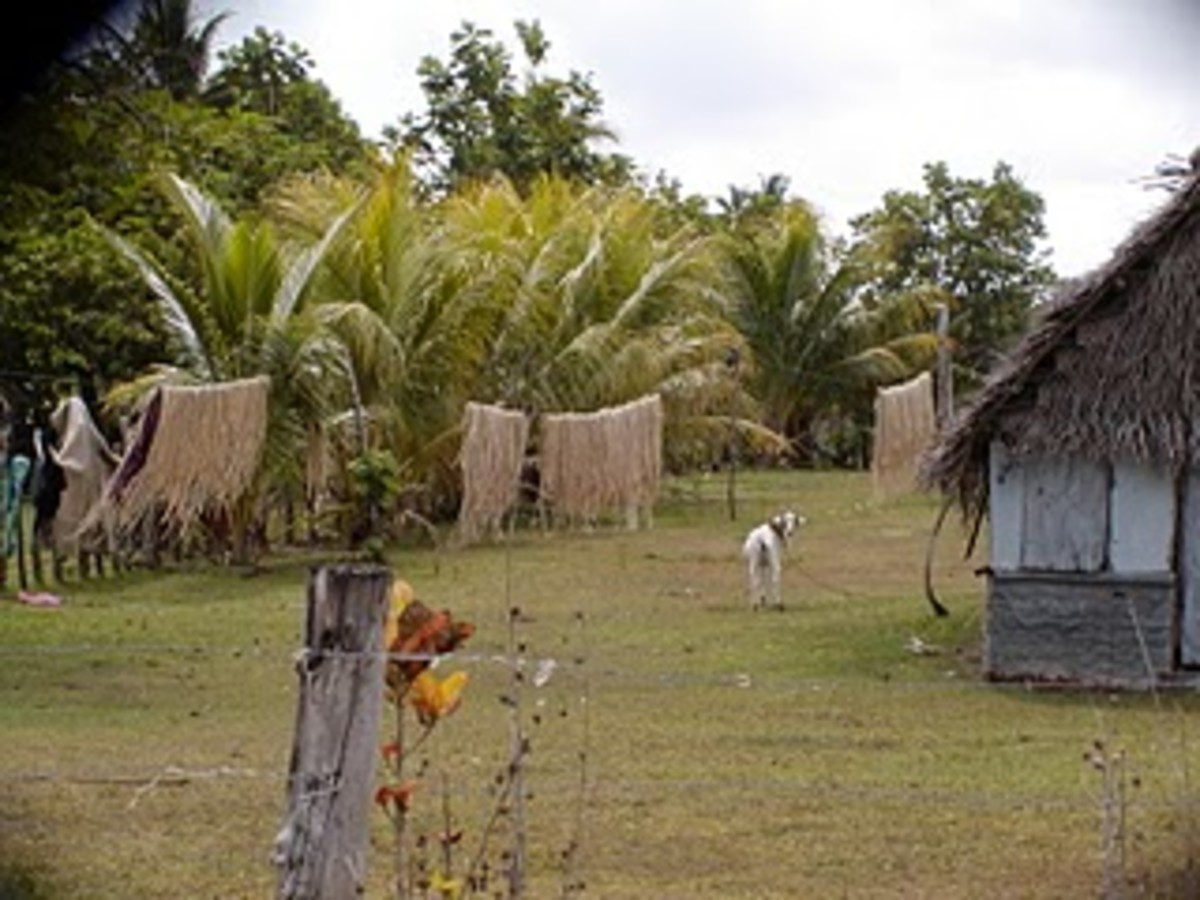 Typical home on Niuatoputapu