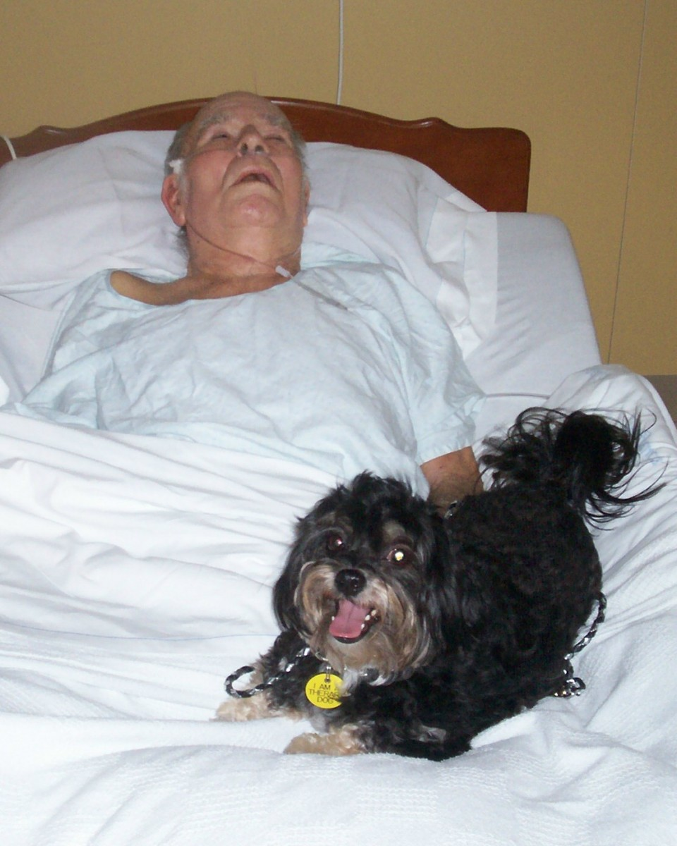 Ace's calling is hospice work. He comforts the last hours of lives. Here he is easing my father, Frank. On his last day, Ace would not leave his bed.