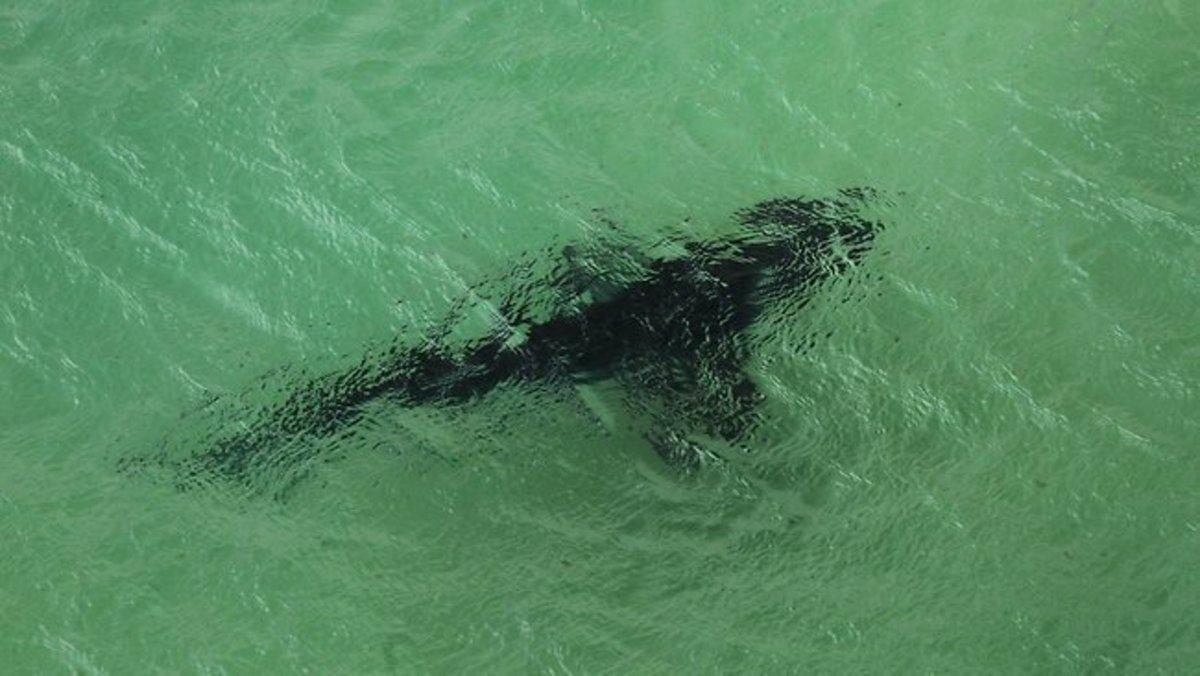 Shark Attacks 2011